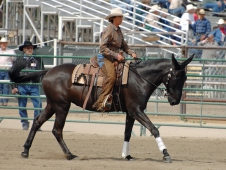 Porter Does Reining