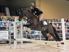 "<a href="" http://www.chronofhorse.com/article/ottbs-getting-fresh-start""<a> OTTBs Getting A Fresh Start</a>"