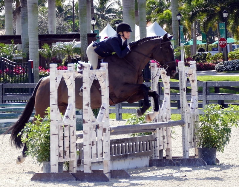 Theresa Sanders showing Banderas in the adult amateur hunter, 50 and over division. Photo courtesy of Theresa Sanders