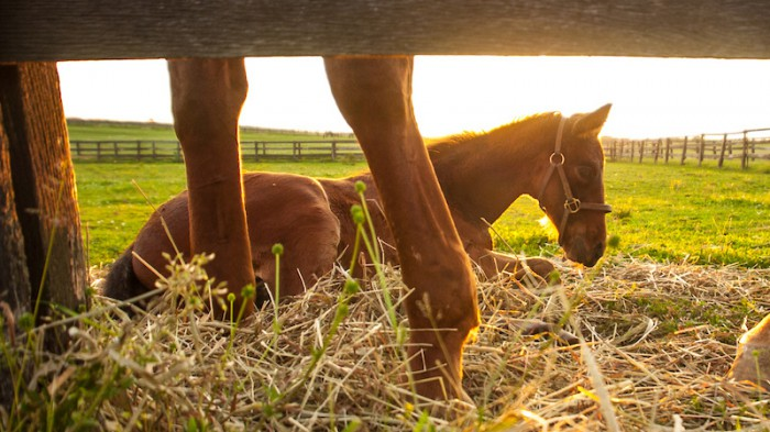 Somewhere in a field, there's a foal that will grow into the next worldbeater. Photo by Amy K. Dragoo