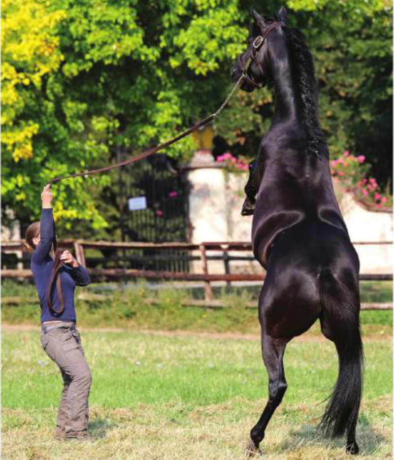 Competitors in the United States have been using medroxyprogesterone to manage naughty behavior and keep their horses more focused on the job at a horse show, but new research shows this drug works on the GABA receptors in the brain, much like Valium or Xanax. FRANK SORGE FOR ARND.NL