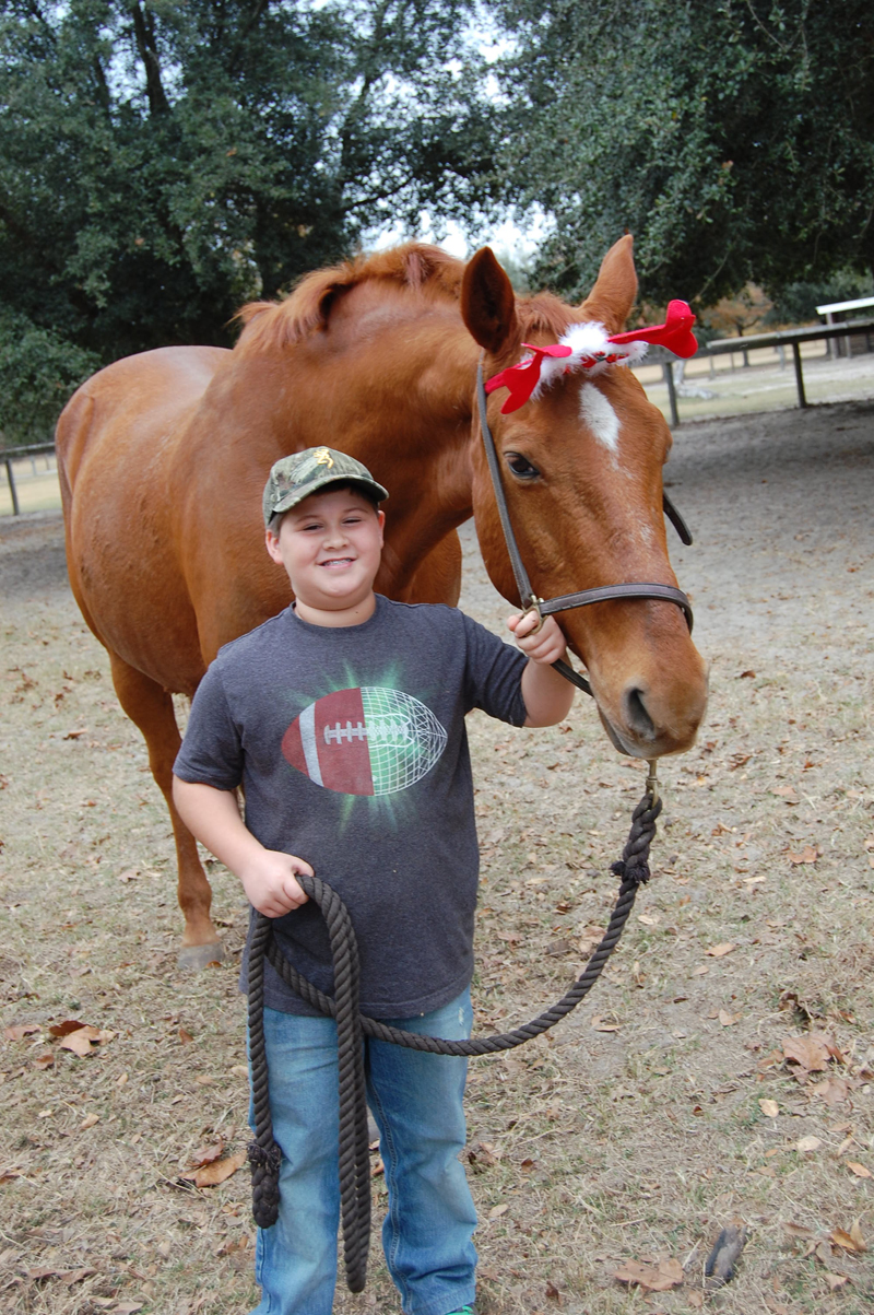 horses Christmas 2016 017