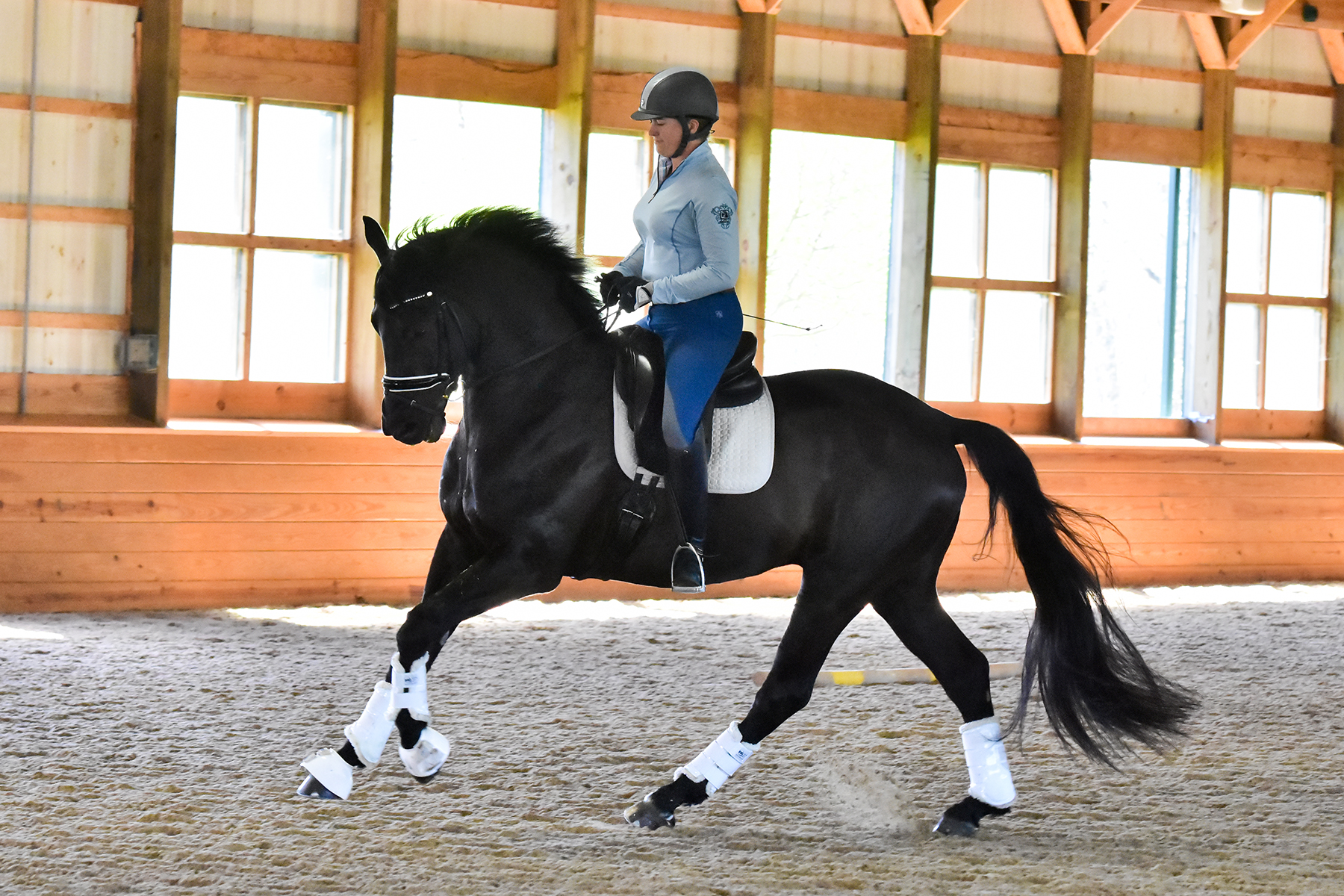 Even big babies like Swagger need work to set them up for a strong, healthy body for life. Photo by TLP Equine Services.