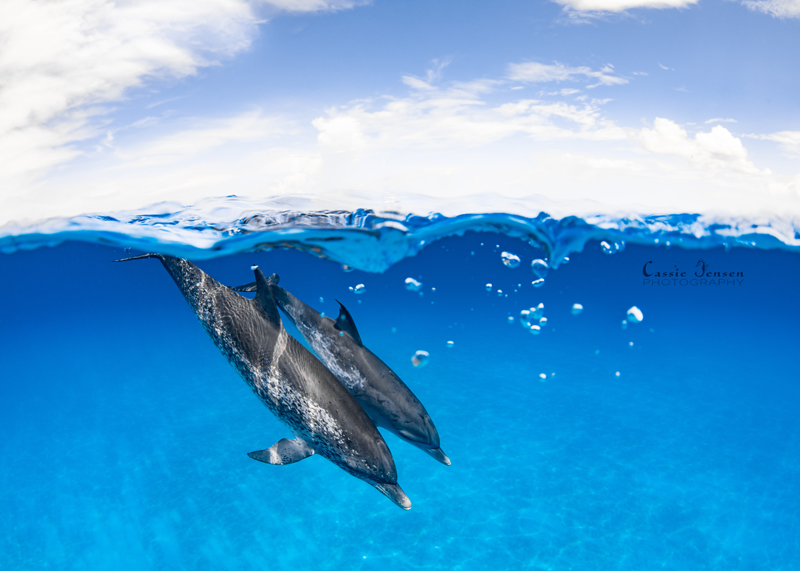*DolphinsSplit