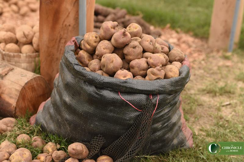 web 15 potatoes PAN_5853