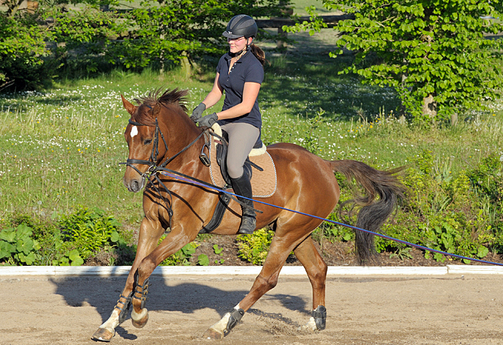 Lunge lesson: Galloping without stirrups