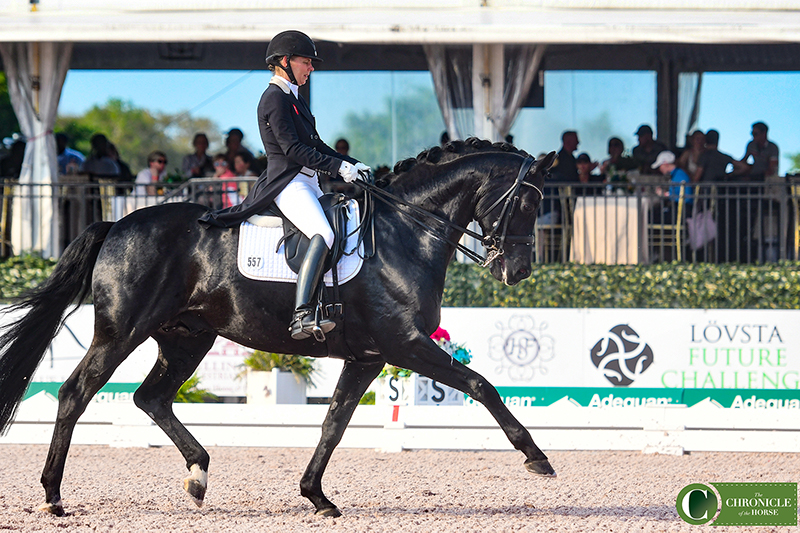 Susan Pape and Harmony's Don Noblesse OPTION 1