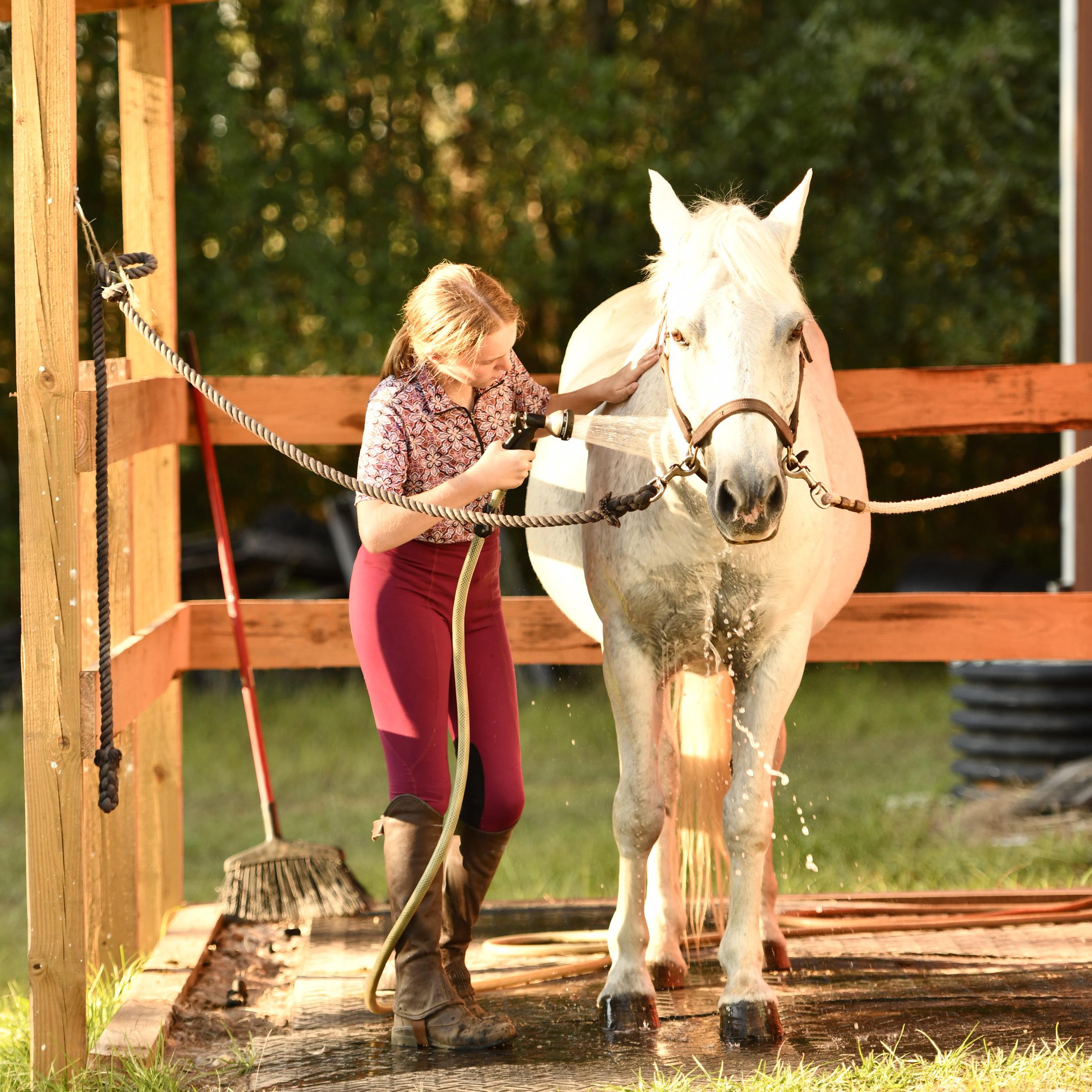 hosing pony_8501619