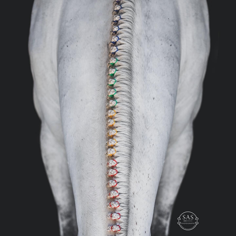 braids image0
