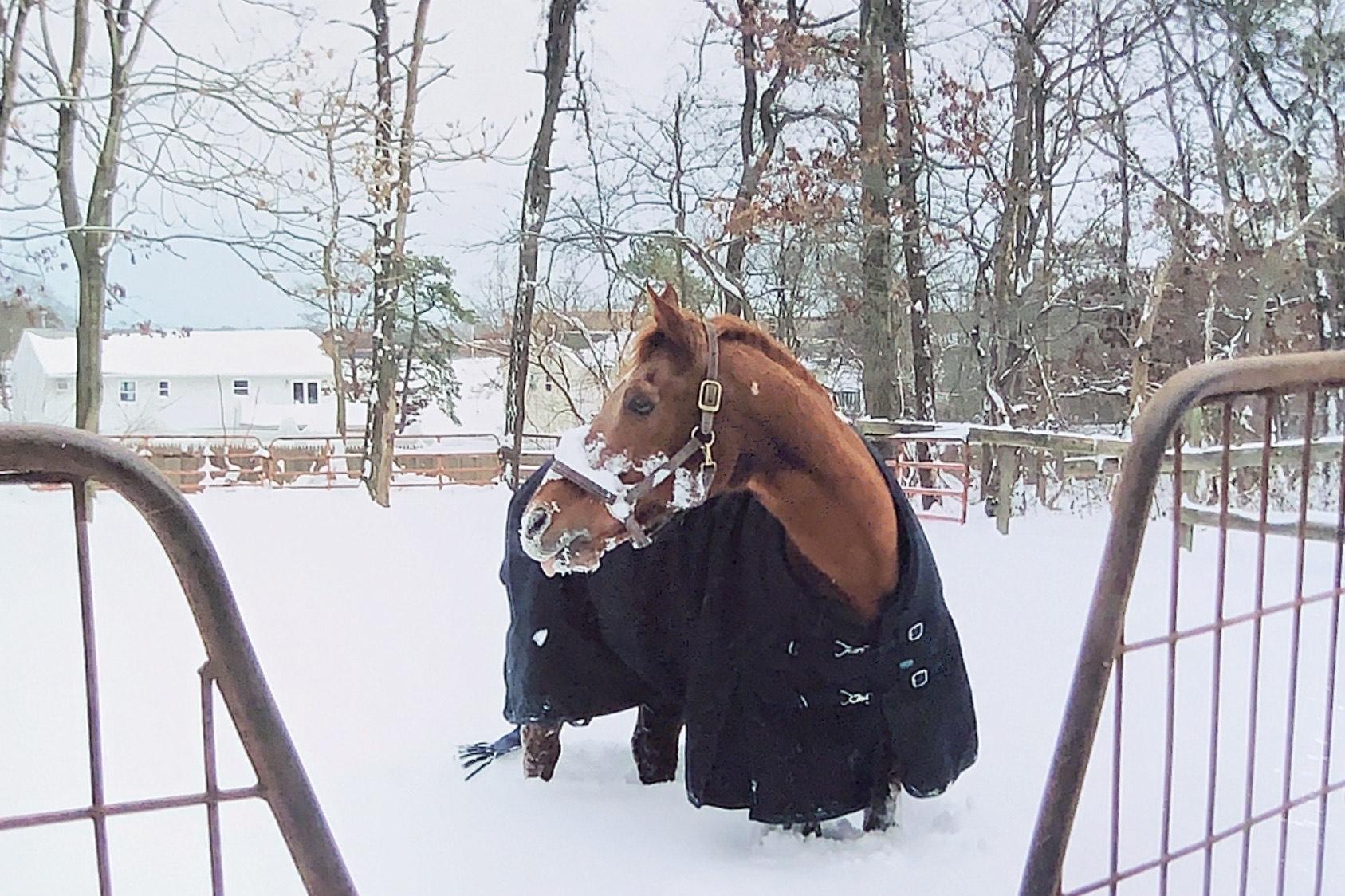 Dapper In Snow