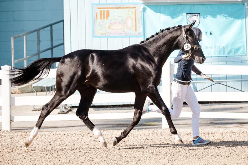 Brink_FinestHourBC_DAD19 PURPLE HORSE DESIGNS
