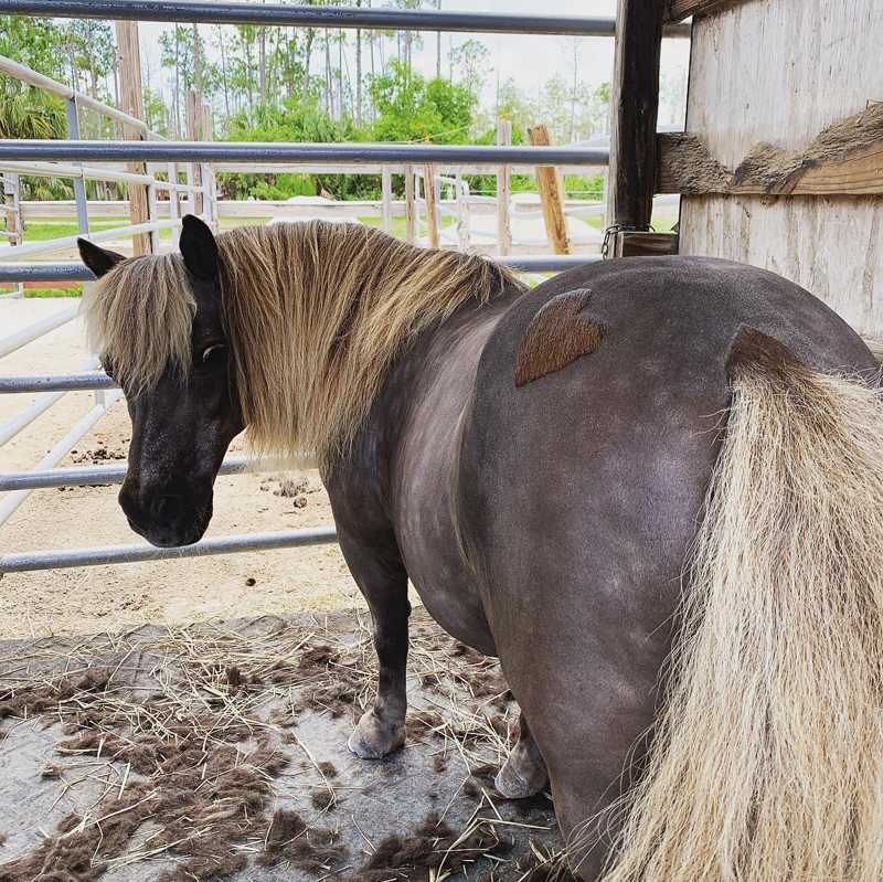 Clip-A-Thon pony