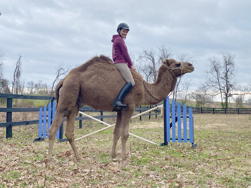 Camel image0